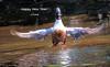 WBY2400-18 7D2-100 Happy New Year! (wbyoungphotos) Tags: happynewyear bird birds heron swim polar bear polarbear wbyoungphotos water lake fishing