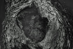 das Gesicht (catwald) Tags: geist gespenst natur erscheinung
