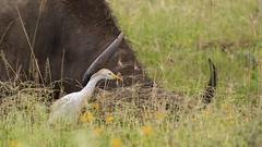 Nairobi-Nationalpark-7231 (ovg2012) Tags: kenia kenya nairobi nairobinationalpark