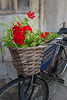 Cycle Flower Basket (Geoff France) Tags: cycle bicycle oxford plant flower basket university universitycollege college