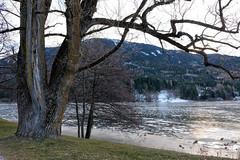 Al lago di Serraia (STE) Tags: baselga di pinè trento trentino inverno winter freddo cold lago serraia lake ghiacciato frozen ghiaccio ice fuji fujifilm xt20 albero tree