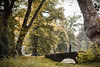 Sur la trace des rois / Rambouillet. (Charline.Minne) Tags: landscape rambouillet chateau parc park tree wood forest nature herbe green couple pont bridge