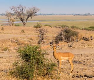 Botswana_2017-7