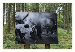 Exposition photo dans la nature du photographe Joël Couchouron (Francis =Photography=) Tags: europa europe france grandest vosges 88 expo exposition forêt forest wald fotoausstellung photoexhibition maréchalferrant marschallferrant blacksmith photo joëlcouchouronphotographe photographe lessentiersdelaphoto2017 lehautdutôt
