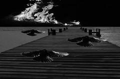 The end (ashokboghani) Tags: surreal photoshop photoshopart digitalart flames dark apocalypse blackandwhite