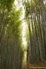 Arashiyama Bamboo Grove (takashi_matsumura) Tags: kyōtoshi kyōtofu japan arashiyama bamboo grove nikon d5300 ngc sigma 1750mm f28 ex dc os hsm