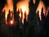 In The Wheat At Sunset.... (Diana Kae) Tags: wheatfield rural ruralamerica farming sunset missouri kansascity dianaobryan dianawhite dianakae dusk golden wheat upclose landscape