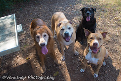 Sandy Creek Park 1 (venusnep) Tags: sandycreekpark sandy creek park dogpark dog privatedogpark pack gpack athens georgia ga athensga november 2017 nikond610 nikon d610