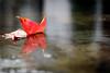 Autumn on Floor (NathalieSt) Tags: camargue europe france gard languedocroussillon aiguesmortes nikon nikond750 nikonpassion nikonphotography leaf leaves feuille feuilles reflet reflect reflection water eau sol rue street floor