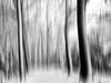 Snowy landscape. (Dikke Biggie.) Tags: winter snow sneeuw winterlandscape winterlandschap snowylandscape sneeuwlandschap tree trees boom bomen line lines lijn lijnen landgoedtewerve rijswijk blackandwhite bw black white zwartwit zw zwart wit monochrome monochroom samsung samsunggalaxy samsunggalaxys6 phonephoto phonepicture telefoonfoto samsungsmg920f motion blurred