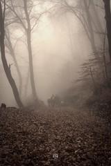[FoggyWood] walking people (sebastiano.riva) Tags: orino campodeifiori 21100 varese foggy nebbia daarklands