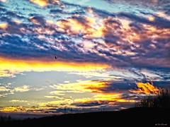 Spread your Wings (Silke Klimesch) Tags: sliderssunday postprocessedtothemax hdr contrejour backlight sunset danube austria bird airplane clouds dramatic silhouettes landscape black blue orange white sonnenuntergang donau wolken vogel flieger drama silhouetten gegenlicht coucherdesoleil atardecer pôrdosol tramonto apusulsoarelui ηλιοβασίλεμα günbatımı закат nori nubes nuvem nuvens nuvola nuages contraluz controluce oiseau pasăre uccello pássaro pájaro πουλί kuş птица on1photoraw2018 nikcollection viveza colorefex dfine olympus omd em5 vintagelens altglas mzuikodigitaled60mm128macro wien vienna 7dwf fauna