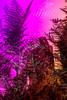 20171031-147 (sulamith.sallmann) Tags: natur pflanzen blur botanik effect effekt farn filter folie folientechnik italia italien italy messina nature pflanze pink plants rosa sicilia sizilien unscharf it sulamithsallmann