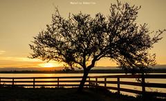 Atardecer (NatyCeballos) Tags: arbol paisaje cielo atardecer parque contraluz sunset silueta silhouette nature naturaleza sol puestadesol sky crepúsculo crepuscule arbre tree backlighting retroeclairage sunlight