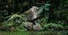 Caldeira Velha 2a 2p (Bilderschreiber) Tags: panorama caldeira velha caldeiravelha sao miguel saomiguel azores azoren portugal europe europa jungle dschungel green grün