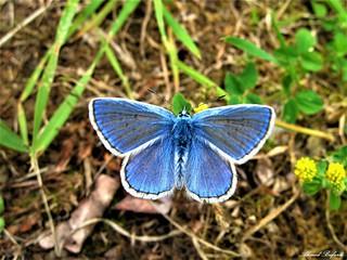Butterfly 1549