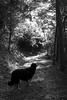 momento sospeso (giovannazorzenon) Tags: cane sentiero bianconero allaperto
