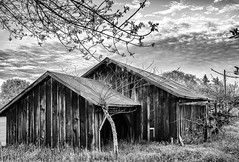 Barn. (LDM707) Tags: california sonomacounty santarosa bayarea canon1200d canonphotography teamcanon photography photo photographer amateurphotography blackandwhite sky hdr instagood barn rural igmyshot agriculture harvest winery vineyard grapes countryliving wine newyearseve