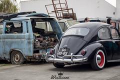 62' VW Beetle / Carocha (Westscene2k16) Tags: vw volkswagen carocha fusca beetle bue westscene westscene2k16 westsceneproject stance slammed static carporn wheelporn wheels fitment low lowlife lifestyle dub lower picoftheday
