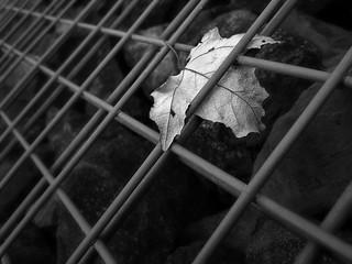 Dance like a fallen leaf on a windy day.
