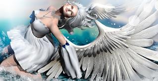 The Swan rising