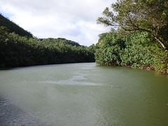 Wailua River State Park - Fern Grotto (30) (pensivelaw1) Tags: hawaii kauai wailuariverstatepark ferngrotto