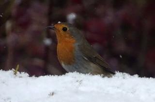 Rougegoge Belpech neige dec 2017