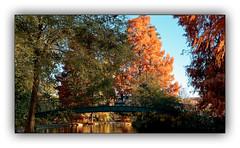 Ballade automnale (Autumn walk) 8 (Jean-Louis DUMAS) Tags: automne autumn feuilles arbre tree colors color couleur paysage landscape parc dxo one ombres lumières explore eau bois lac rivière forêt jardin pelouse pont passerelle