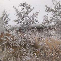 Kinnordy Loch (Elrenia_Greenleaf) Tags: kinnordyloch frost winter ice scottishwinter scottishscenery