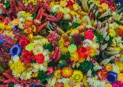 Jardín (Felipe G.Fuertes) Tags: flowerpicturesnolimits flor flower polonia poland polska cracovia krakow naturaleza natura nature olympusxz2