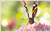 Falter (ElbSachse) Tags: canon sigma macro makro 105mm hsm bokeh elbsachse schmetterling butterfly nice flowers
