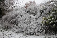 IMG_3455 (Jeff And) Tags: harrow greenhill bonnersfieldlane walk trees split branch