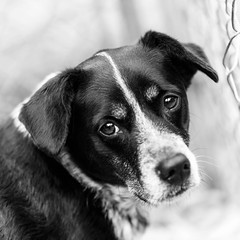 Daindridge17Dec201786-Edit.jpg (fredstrobel) Tags: dogs pawsatanta atlanta usa animals ga pets places pawsdogs decatur georgia unitedstates us