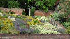 Caversham Court Gardens, July 2017 (7) (karenblakeman) Tags: caversham uk cavershamcourtgardens flowers july 2017 reading berkshire