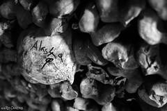 Alas4φ (Red Cathedral [FB theRealRedCathedral ]) Tags: redcathedral aztektv sony alpha slt mkii sonyalpha a77ii a77 dslr sonyslta77ii translucentmirrortechnology wanderlust digitalnomad contemporaryart graffiti urbex alittlebitofcommonsenseisagoodthing travellingphotographer travel cosplay larp livinghistory blackandwhite zwartwit noiretblanc paris france catacombes catacombs ossements skull skeleton dead undead thewalkingdead horror eerie creepy scary halloween underground museum tunnels hell gateway catacomben cemetary burialplace cimetiere kerkhof massagraf tombe