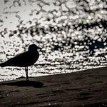 Silver Beach Moment thumbnail