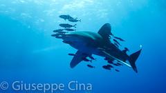 _DSC4006.jpg (pinocnt) Tags: crociera cruise daedalusisland egitto egypt myaldebaran marrosso redsea underwater vacanza