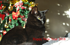 Happy New Year (Blue sky and countryside) Tags: kitty cute adorable furryfriend home newyear wishes christmastree derbyshire england happy pentax 2018