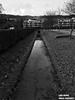 Lac Léman Switzerland Trhee (lifehopefinalproject) Tags: suisse lac léman ponton arbre chemin rivière canard eau bw iphone 7 no retouche janvier 2018 rolle filtre de base