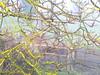 IMG_0005x (gzammarchi) Tags: italia paesaggio natura pianura campagna ravenna sanmarco animale cavallo cornice albero noce