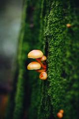 Hanging On (Viv Lynch) Tags: canada britishcolumbia vancouver vancity westcoast pacificspiritregionalpark forest park trees outdoor hiking bc pacific nature mushroom fungi mycology mushrooms fungus