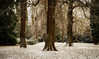 Snowy Scene (Trevor Bowling) Tags: clumberpark snow garden trees trunk nationaltrust grass cold winter 2017 forest snowfall