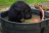 Play Time (swong95765) Tags: blackbear bear girl kid female tub water ball fun play animal humor funny