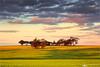 Sunset Fields (Darkelf Photography) Tags: canola fields york western australia rural outback landscape nature clouds trees plants flora sunset evening dusk canon nisi 24105mm 5div maciek gornisiewicz darkelf photography 2017