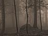 Belledonne, 2017 (Olivier BERTRAND) Tags: belledonne arbre blackandwhite blackandwhitephotography digitalphotography forest forêt hybridcamera isère landscape monochrome micro43 noiretblanc nature naturallight olivierbertrand olympusem5markii olympus paysage panasoniclumix25mm 25mm lumix25mm france