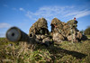 British Army Sniper Commanders Course (Defence Images) Tags: 525x56mm scope telescopicsight smallarms boltaction spottingscope sniper weapon camo sws specialistweaponschool warminster livefiring 338mm 338 sniperrifle rifle l115a3 l115a2 specialist snipercourse ghilliesuit ghillie army equipment clothing combats camouflage multiterrainpattern mtp aiming firing weapons gun firearm l115a3longrangerifle 859mm ammunition rounds personnel nonidentifiable soldier male man training terrain landscape grassland wooded defence free defense uk british military wiltshire england