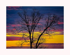 Trees in Winter — Image 6 (George McHenry Photography) Tags: winter skies winterskies trees sunrise southcarolina silhouettes