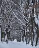 deeper (tewhiufoto) Tags: tewhiu tewhiufoto nikon nature winter šumava bohemiaforest böhmerwald bayerischerwald bavaria wald