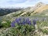Beartooth Highway (GlenSylvan) Tags: beartooth alpine montana wyoming