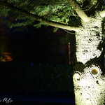 Kingston-Lacy-8572 thumbnail